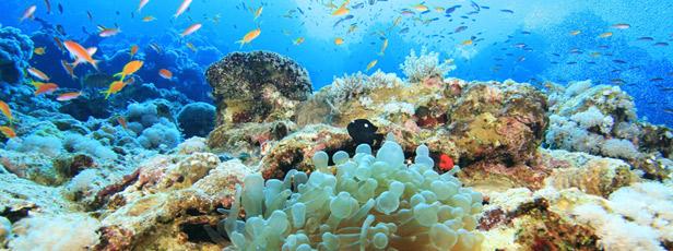 Centrum potápění Amers - Rudé moře